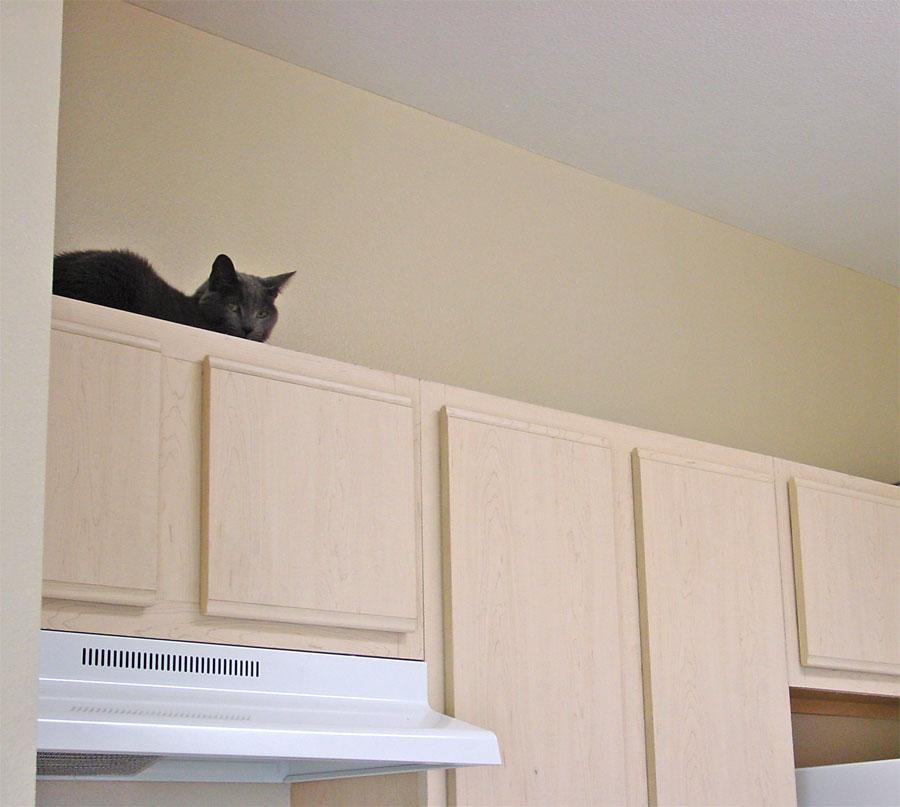 Smokey-above-kitchen-cabine